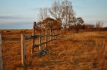 old-fence-in-field